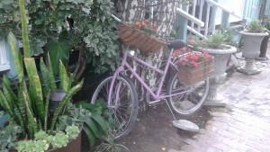 SJC bike