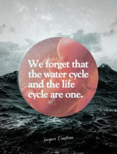 Life cycle